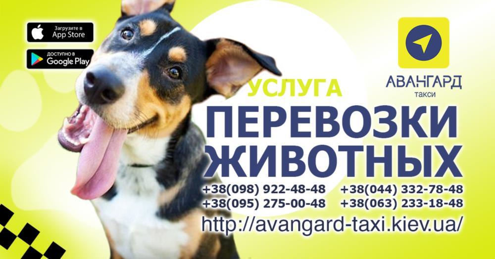Авангард Такси в Киеве