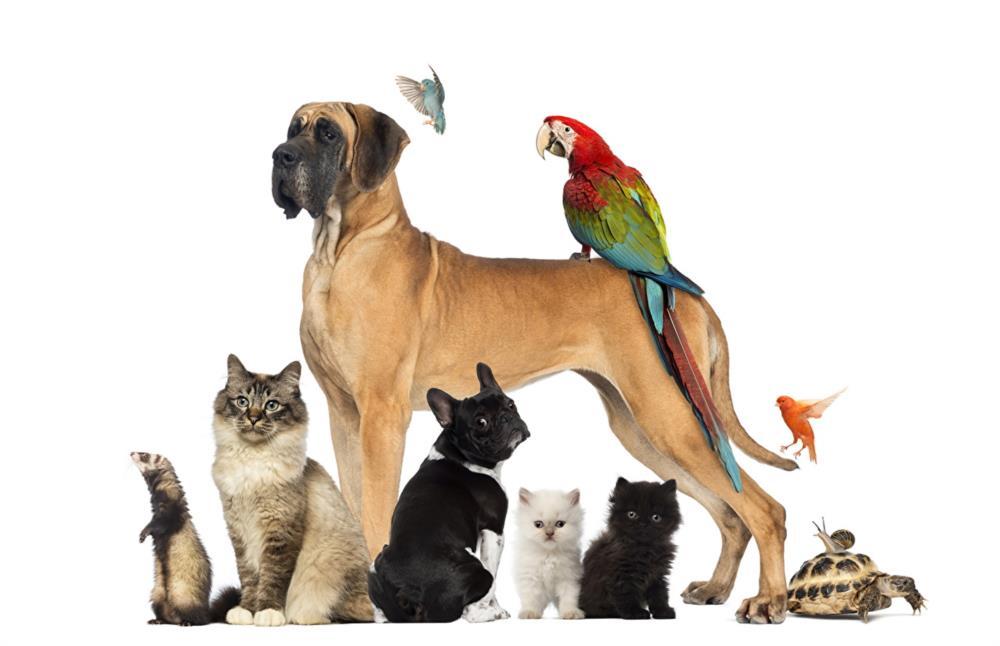 Инструктор кинологвыгул передержка собак котиков и других животных