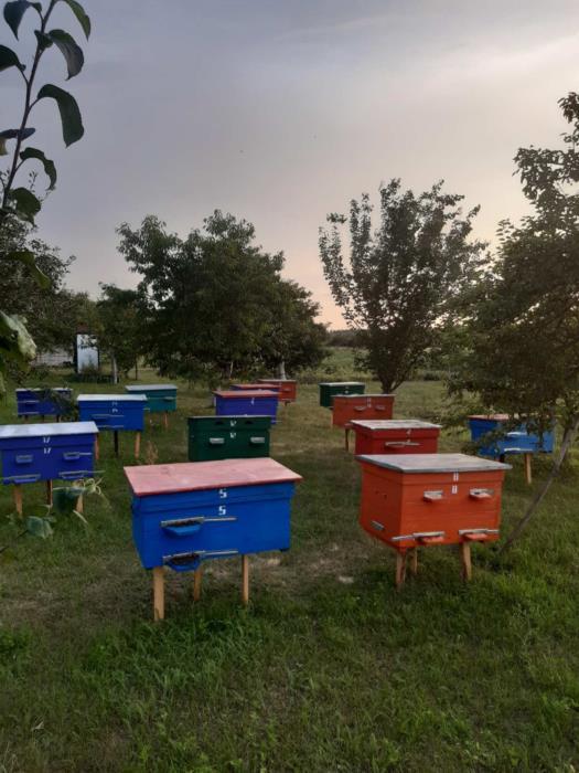 продам мед з власної пасіки