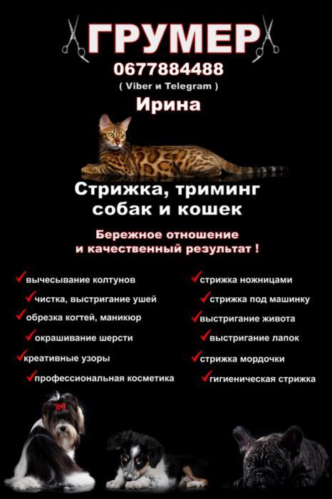 Грумер Харьков - Песочин  Стрижка собак и кошек
