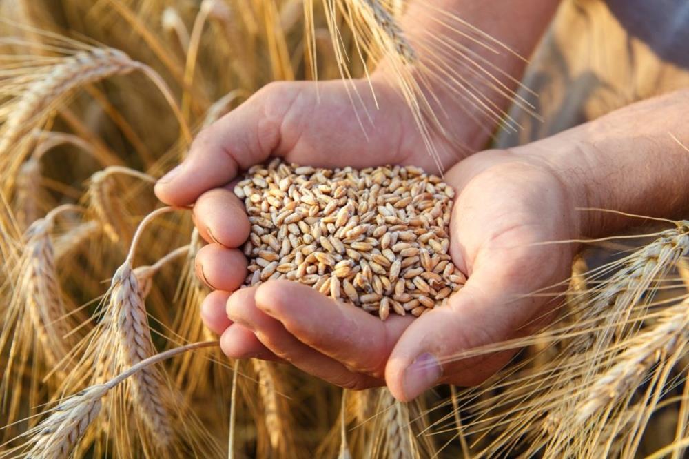 Купим ячмінь пшеницю