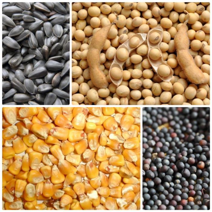 Завод по переработке сои может купить сою и другие масличные культуры оптом и в розницу